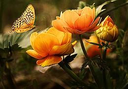 Museumswerkstatt für Kinder: Die Schmetterlingsfrau