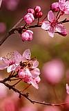 NaturWissenSchaffen: Was macht die Biene aus?
