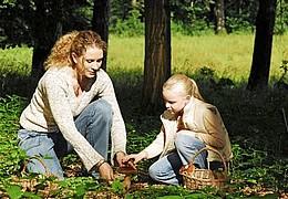 Pilze - Exkursionen, Kurse, Vorträge und Beratung