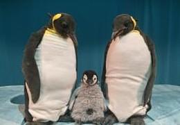 Pit Pinguin