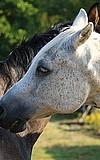 Pony total
