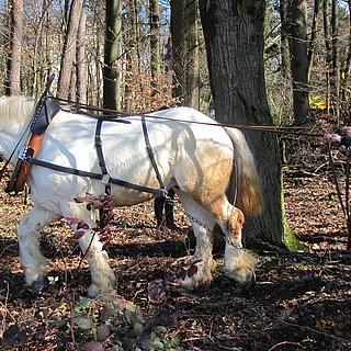 Natur*Wissen*Schaffen-Projekt: Waldarbeit und Pferdeschweiß