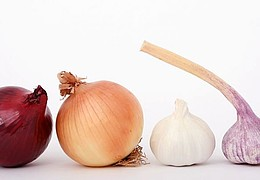 Unterirdische Kraftpakete – Das Geheimnis von Knollen, Zwiebeln und Rhizomen