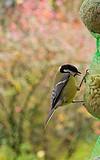 Vogelspeisekarte für den Winter – Selbstgemachte Leckerbissen für Weich- und Körnerfresser