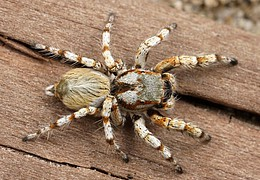 Von Jägern und Gejagten – Fangtechniken von Spiderman und anderen Waldtieren mit Lagerfeuer