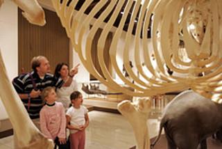 Vorlesestunde im Naturhistorischen Museum Mainz