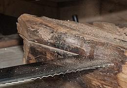 Wald- und Holztag