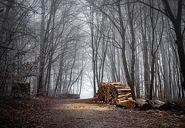Waldwerkstatt mit Rückepferd Quoli