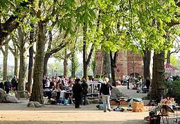 Wanzenmarkt auf dem Feldbergplatz