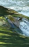 Wasserforscher