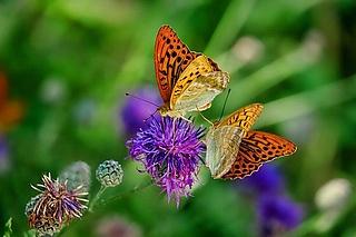 Auf zu den Schmetterlingen