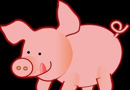 Gunda, das Riesenschwein