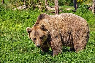 Tag der Biodiversität im Zoo Frankfurt