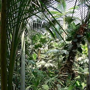 Tiere und Pilze in Frankfurts botanischen Gärten