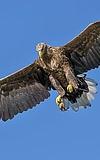 Zum Greifen nah - Greifvögel aus der Nähe