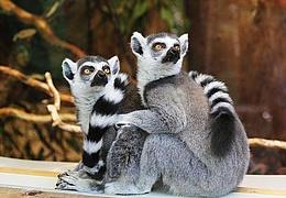 Sommer-Zooferien: Basteln für Tiere