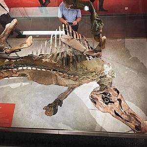 Dinoausgrabung mitten in Frankfurt