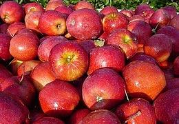 17. Mainzer Apfelfest