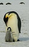Forschungsreise zu den Pinguinen