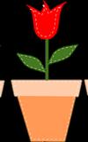 Bunte Blumentöpfe