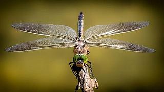 Thementag Insekten im StadtWaldHaus